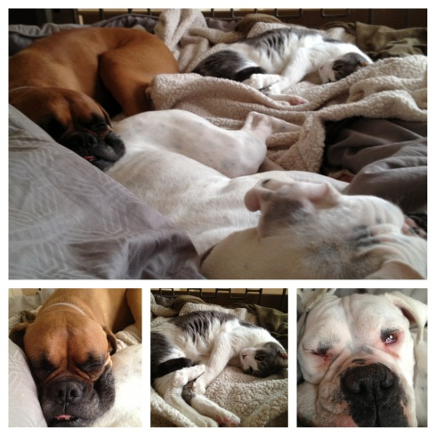 Bruce, Rhonda and Boo Boo - Lazy Sunday morning!